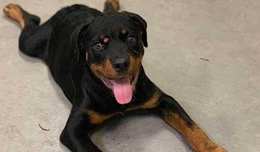 Puppy Consultation Columbia